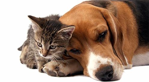 Chronische nierinsufficiëntie bij hond en kat
