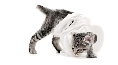 Diarree bij hond en kat