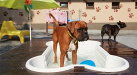 Dogs and hot weather: 8 tips
