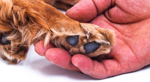 Hautprobleme bei Hunden und Katzen