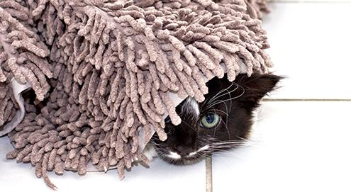 Help! Mijn kat plast in huis. Wat nu?