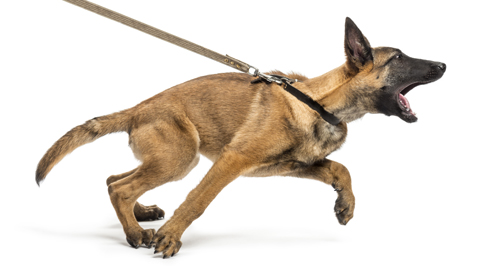 Hilfe, mein Hund zieht an der Leine