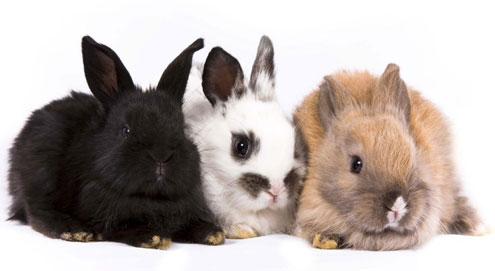 Kaninchen als Haustier halten