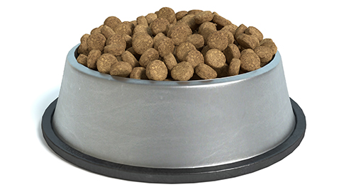 Futtermittelallergien bei Hunden und Katzen