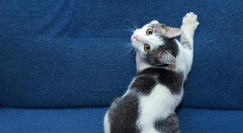 Ongewenst krabgedrag: kat krabt aan meubels, behang of tapijt