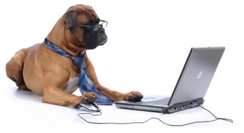 Online dierenapotheek Medpets.nl viert 150.000ste bestelling