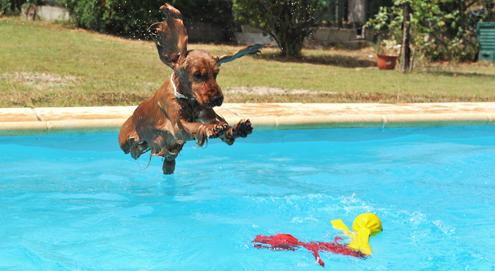 Op vakantie met uw huisdier? Tips en advies
