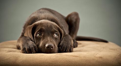 Silvestertraining für Hunde