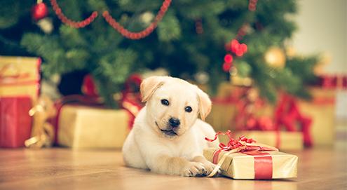 Tipps für die Weihnachtszeit