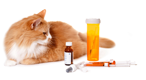 Tips voor het gebruik van tabletten, supplementen, zalven, kragen en hulpmiddelen
