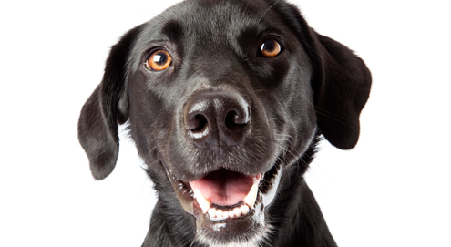 Das Hundegebiss & die richtige Zahnpflege